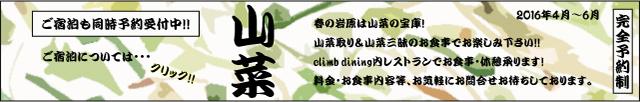 山菜取り&山菜三昧